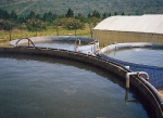 Fertigation tank system