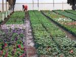 Hand-watering Patio-plants