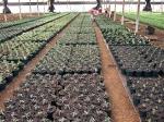 Planting Patio Plants