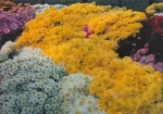 Quality Flowers Chrysanthemum