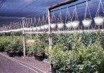 Shade-house Potted plants